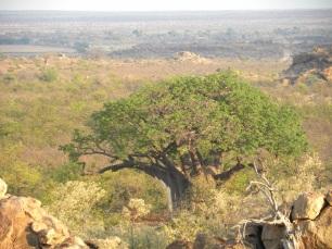 mapungubwe-kaoxa-28