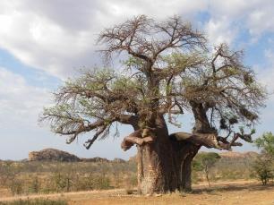 Mapungubwe Kaoxa (43)