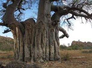 Mapungubwe Kaoxa (49)
