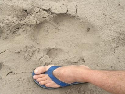 A rare footprint : The dreaded white wino