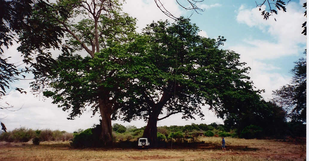 KenyaTsavo (1)