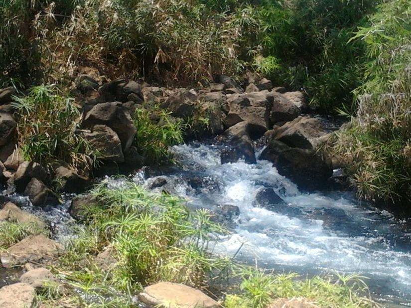Mzima Springs