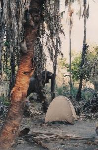 OddballsOkavango (14 small)
