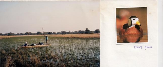 OddballsOkavango (7 small)