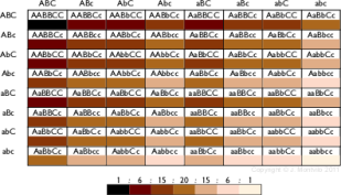 Skin Colour Genes