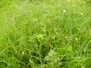 10 Elston Meadow (4)