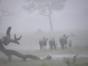 HwangeSomalisa2010 (18)