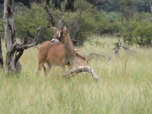 HwangeSomalisa2010 (321)