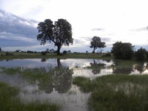 HwangeSomalisa2010 (55)
