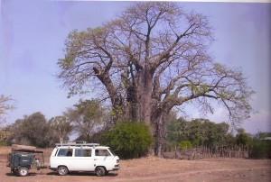 MalawiWithKids Kombi Baobab-001