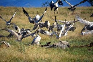 Barry Porter vulture hide_2