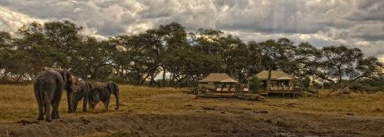 Somalisa Camp
