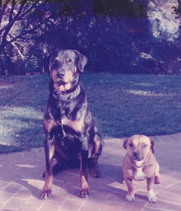 dogs-river-dr-matt-tc