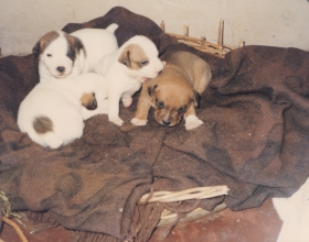 Puppies 1988 Farm.jpg