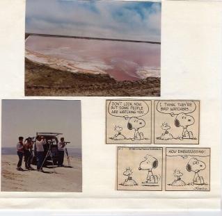1986 birding trip. Geoff, Jurgen, Mick, Jill & us two in a kombi