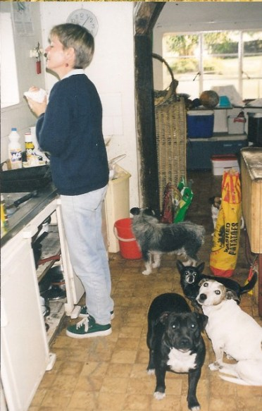 Goldie with TC's sire & dam - Stan the Staffie & Mouse the Jack Russell