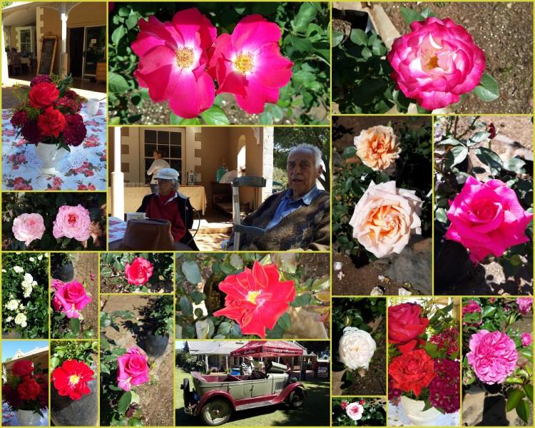 Tarr Roses Open Day2.jpg