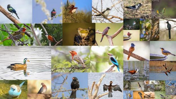 Temp birds-001.jpg
