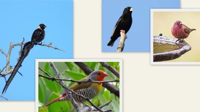 Temp Bots Birds-001.jpg
