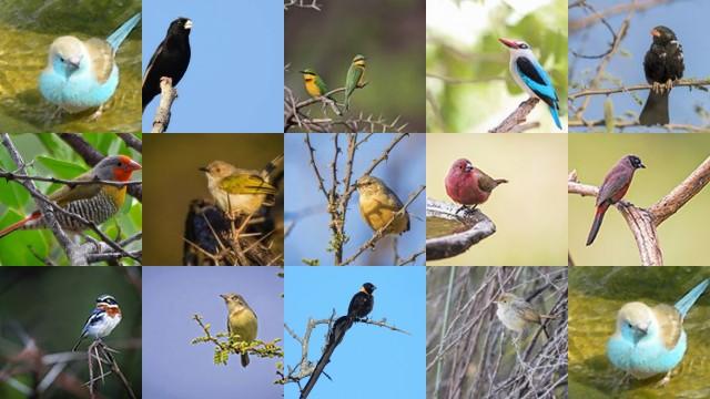 Temp Bots Birds.jpg