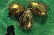beetle_2
