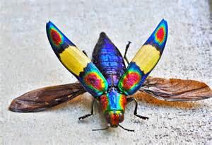 beetle_3