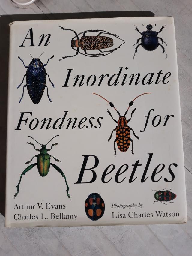 Beetles fondness