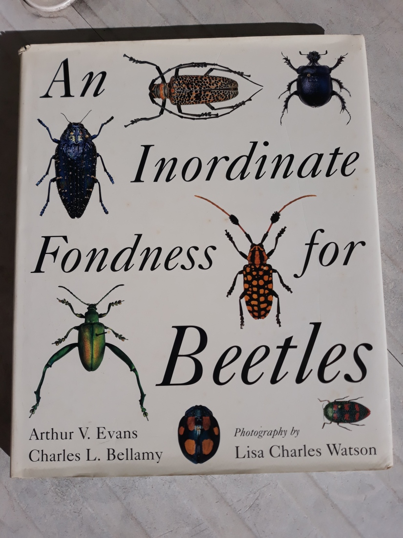 Beetles fondness