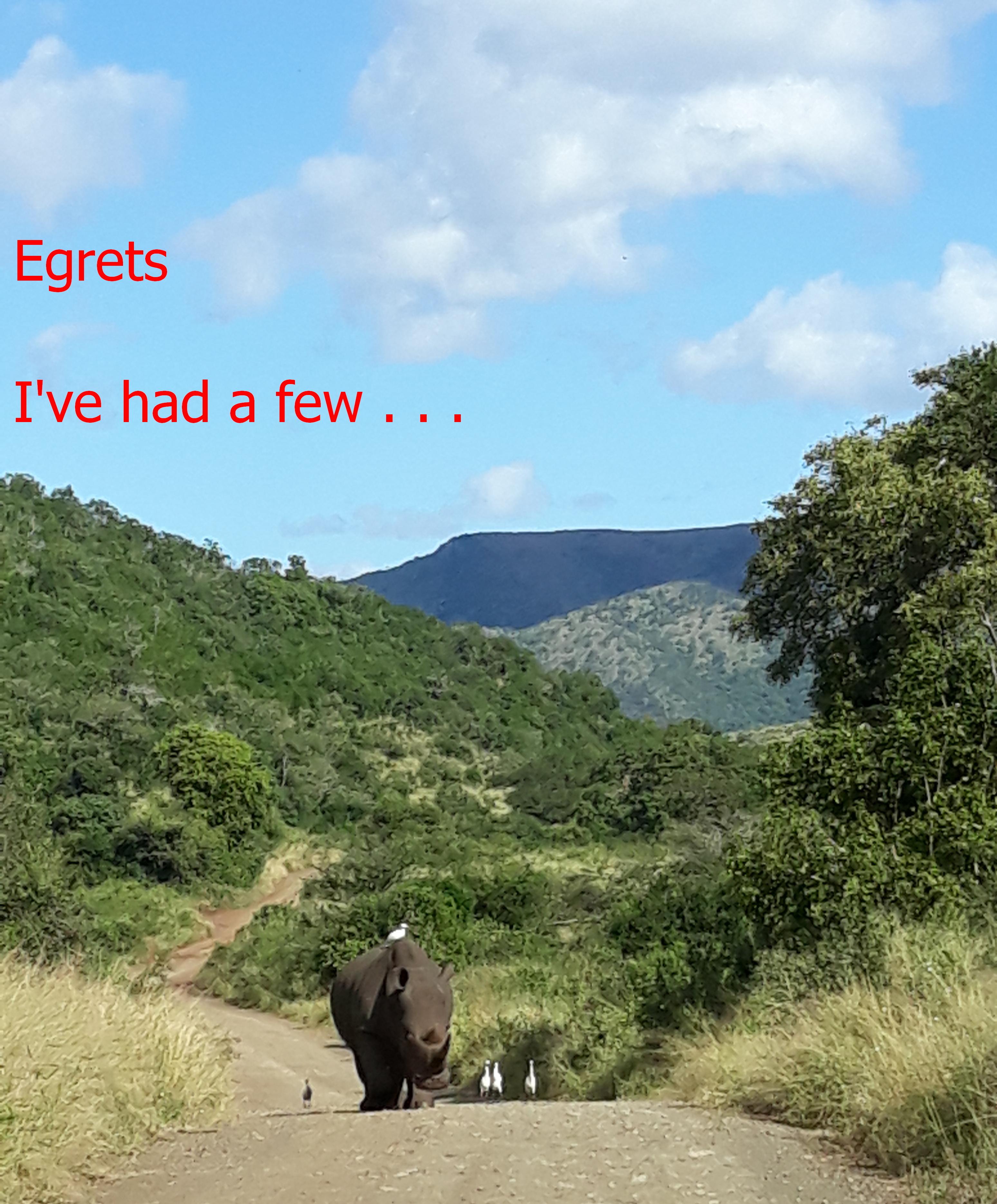 Hluhlu Rhino Egrets