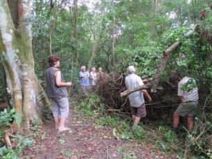 Ngoye Forest (11)
