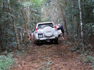 Ngoye Forest (2)