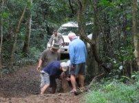 Ngoye Forest (4)