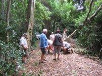 Ngoye Forest (7)