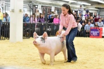 okla hog show