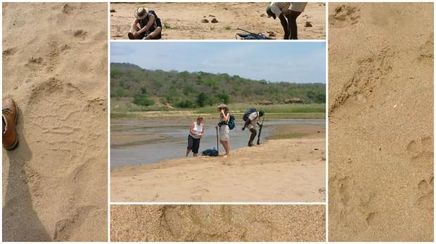 Wading the Mfolosi