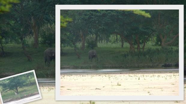 Mfolosi Wilderness walk 1999 & 2005 waterhole collage