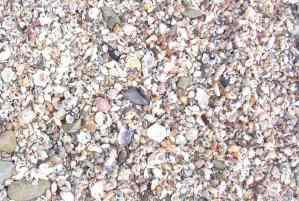 Wild Coast walk_2004 rocky shelly shore