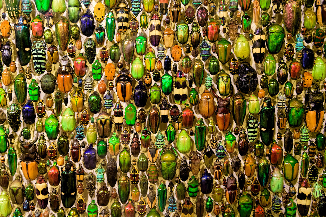 a tray of beetles